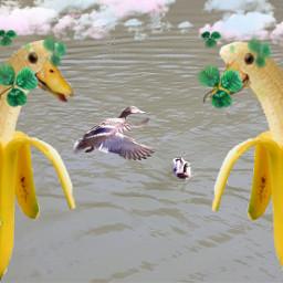 freetoedit duck