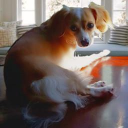 freetoremix addie adaline dogportrait sweetdoggo artographybypamela mansbestfriend mydog windowseat sunnyaesthetic artography freetoedit