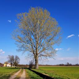 countryside tree landscape myphotography italia passeggiata freetoedit