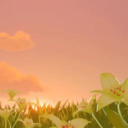 genshinimpact genshin sunset flowers field sky windblumefestival