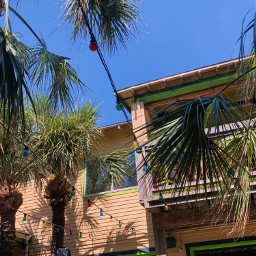 summer tropical palmtree freetoedit