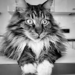 cat catlover catlove pet katze katzenliebe freetoedit