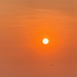 freetoedit nature sun sunset bird free freedom orange red clud clouds sky city buildings