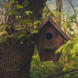 spring birdhouse myphoto myshot woods