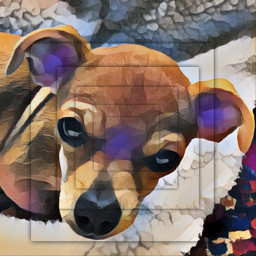 dog cute cutedog cutepuppy pets pet puppy colourful animal squares ginger freetoedit