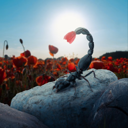 ant scorpion tulip poppy field 365world