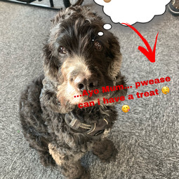 doggy freetoedit