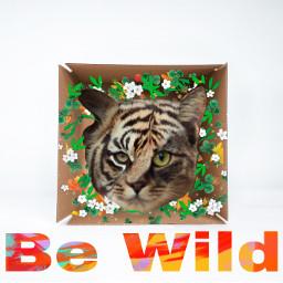 bewild ircwhatsinthebox whatsinthebox freetoedit