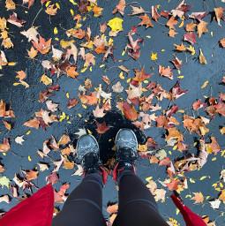 fall fallleaves season