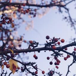 season berries nature photography
