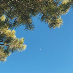 freetoedit tree moon blue sky nature trip travel