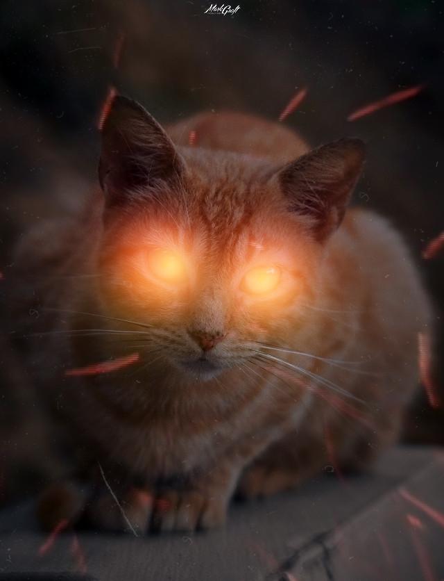 #myedit #picsart #pa #madewithpicsart #surreal #cat #glare #surrealism #manipulation