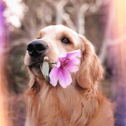 dog doug freetoedit