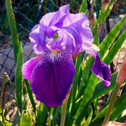 flowers bokeh macro purple flowerphotography