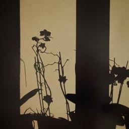 photo phoyography shadows yellow lights flower pcshadows