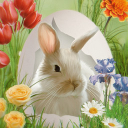 bunny rabbit bunnyrabbit egg cracked ircdesigntheeasteregg freetoedit