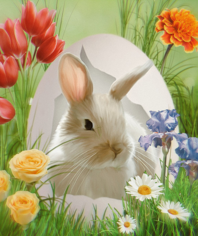 #bunny #rabbit #bunnyrabbit #egg #cracked #grass #flower #flowers #spring #easter #happyeaster #colors #colorful #animal #roses #tulips #daisies #springtime #springflowers #fur #whiskers #ears #cute #easteregg #easterbunny #ircdesigntheeasteregg #designtheeasteregg #freetoedit