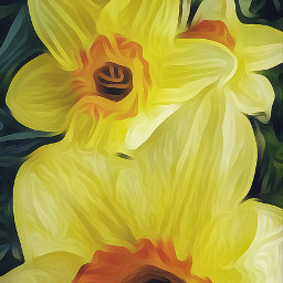 daffodils oilpaintingeffect spring flowers