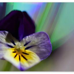 flower nikonphotography nikonphotos spring flowersaroundme