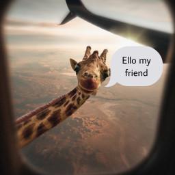 giraffe freetoedit