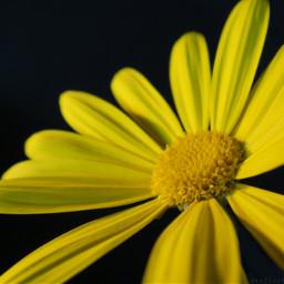 freetoedit flower natural macro closeup