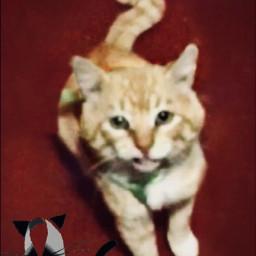 freetoedit cat gato mascota fotografia triste llorar macho foto luto muerte muerto