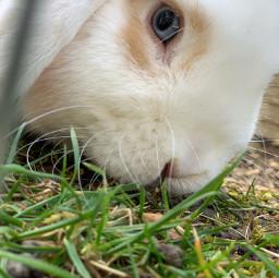 bunny flocke cute freetoedit