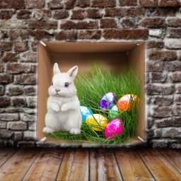 rabbits easter easterbunny box cute white familyportraits house grass freetoedit ircwhatsinthebox whatsinthebox