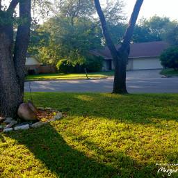 trees grass greenbeauty light shadows