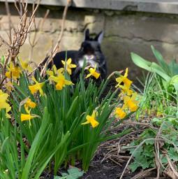freetoedit bunny spring blacky cute black