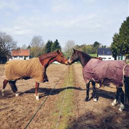 cuties friendship horses horselove naturephotography animals sunshine spring