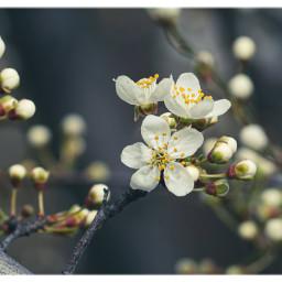 macro nature macrophoto naturephotography beauty blossom spring freetoedit