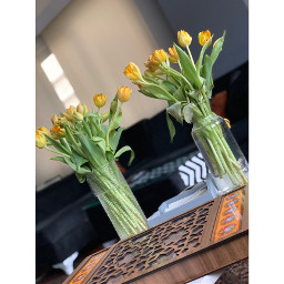 flower plants flowerplant table freshness happiness gift yellow indoors home house