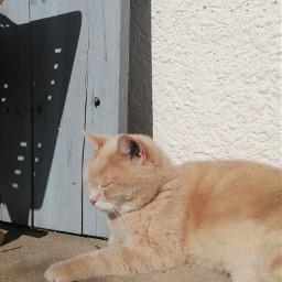 cat sandy sunny sunshine beautiful
