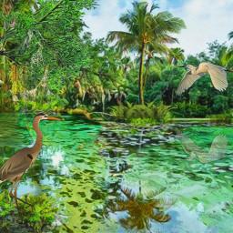 florida swamp tropicalvibe palmtrees freetoedit