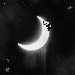 freetoedit srccutepandas cutepandas night moon
