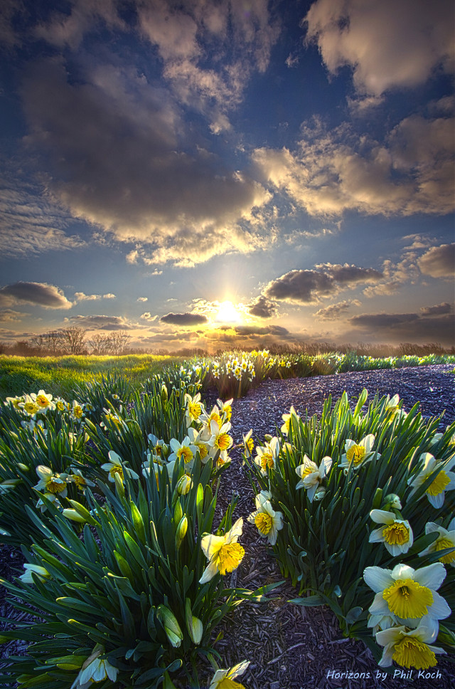 """"""" Therefore We Do Not Lose Heart """" - Wisconsin Horizons by Phil Koch. Turning natural landscapes into portraits of nature. #freetoedit #remixit #nature #landscapephotography #beauty #pretty #landscape #flowers #daffodils #spring #springflowers #happytaeminday #follow"""