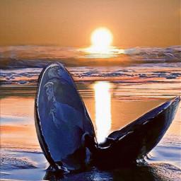 sunset clamshell ocean beach freetoedit