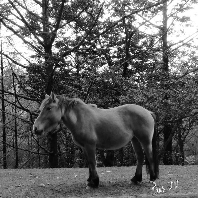 #historiasdes_veladas_de_mi_dia_a_dia #horse #bnw