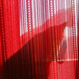 dubravka_m dubravka_m_art photography photo capturedonhuawei capturedonhonor capturedonhonor20lite honor20lite huaweishot honor20liteshot shot catsportraits portraitphoto portrait pcshadows shadows