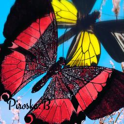 mycreation butterflies ipadart artistic colorful fcexpressyourself