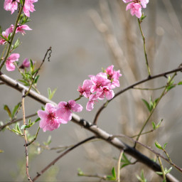nature naturephotography naturelover beautifull primavera spring