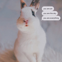interesting party sky photography cute bunny bunnies bunnyboy spain martes freetoedit