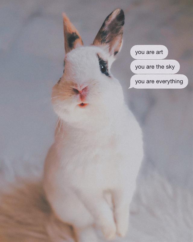 #interesting #party #sky #photography #cute #bunny #bunnies #bunnyboy #spain #martes
