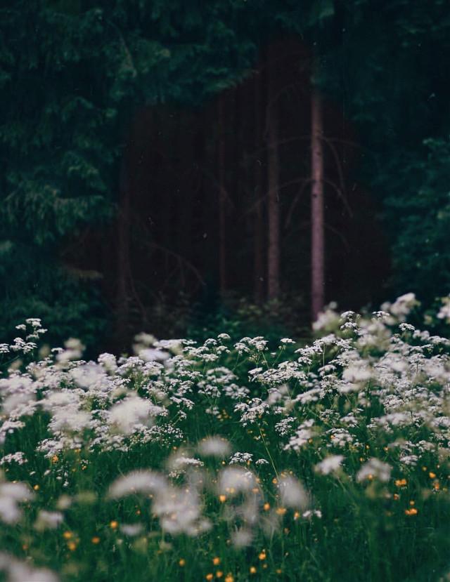 #nature #morningwalk #countryside #intothewoods #woodswalking #enjoyingnaturesbeautyadayatatime #plantsandflowers #wildflowers #naturesbeauty #treesbackground #depthoffield #appreciatenaturearoundyou #softcontrast #foregroundblured #lowangleshot #naturephotography