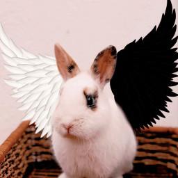 interesting uwu yes omg cool bunny freetoedit
