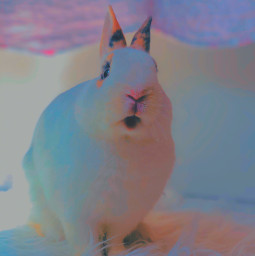 uwuwu cute bunny freetoedit