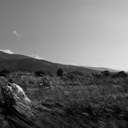 fotoblancoynegro campo camp sky