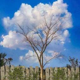 arbol nube freetoedit