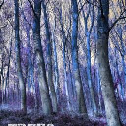 trees blue text coloureffect myphoto